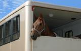Les fleurs de Bach n° 122 Stress du transport chez le cheval